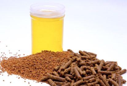 Camelinaolja godkänt som fiskfoder